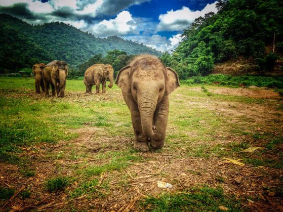 Chiang Mai mountain highlands Thailand